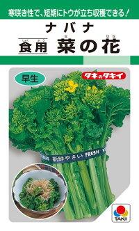 寒咲き性で 流行のアイテム 短期にトウが立ち収穫できる タキイ種苗 葉菜 食用 菜の花 1dl 超特価