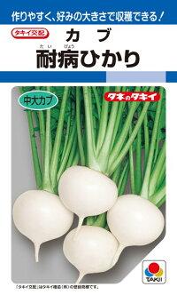 タキイ種苗 カブ 蕪 耐病ひかり 1dl