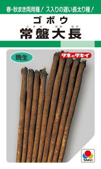 タキイ種苗 ゴボウ 常盤大長 1L