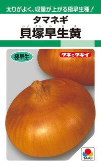 タキイ種苗 タマネギ 玉葱 貝塚早生黄 1L