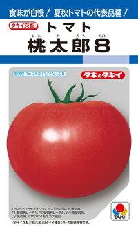 青枯病に強く 通信販売 食味にすぐれた夏秋用完熟トマト タキイ種苗 大規模セール トマト 100粒 桃太郎8