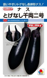 濃黒紫色でツヤがよい タキイ種苗 ◆在庫限り◆ ナス 爆買い新作 茄子 DF とげなし千両二号 PVP
