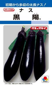 初期収量が多い極早生の太長ナス タキイ種苗 ナス 在庫処分 爆売りセール開催中 黒陽 2000粒 茄子