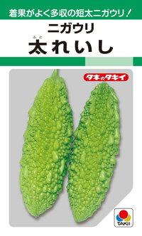 着果がよく多収の短太ニガウリ お求めやすく価格改定 タキイ種苗 購入 ゴーヤ ニガウリ 1L 太れいし