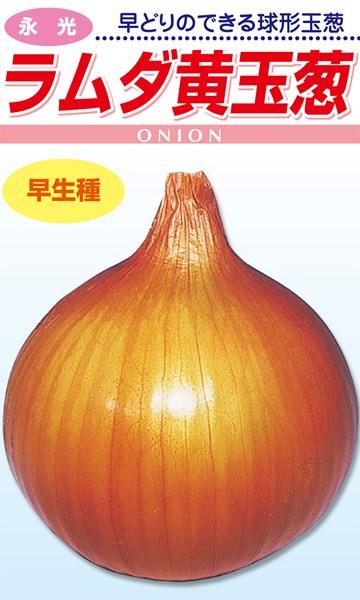 松永種苗 タマネギ 玉葱 ラムダ黄 2dl