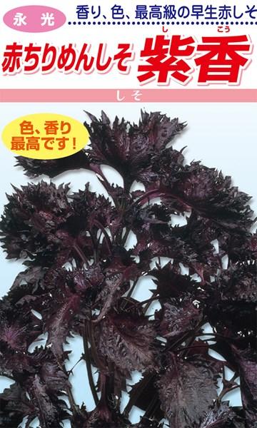 梅干し漬けに最適な縮緬の赤しそ 松永種苗 シソ 特価品コーナー☆ 紫蘇 上品 赤ちりめんしそ 紫香 1L