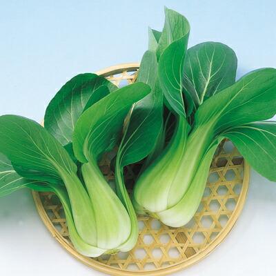 ナカハラのたね 中国野菜 冬八仙チンゲンサイ 2dl