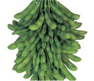 食味はさらにグレードアップ 抑制栽培にも最適 雪印種苗 エダマメ 開店記念セール 莢音 贈り物 コート PVP 1L