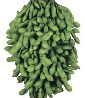 味にこだわればこれしかない 中早生品種のロングセラー 在庫一掃 雪印種苗 数量限定 エダマメ 1L コート ユキムスメ