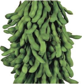 未使用品 様々な場面で利用される大莢 濃緑 中早生 正規品 雪印種苗 コート 1L サヤムスメ エダマメ
