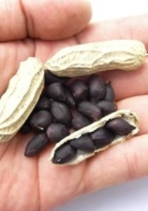 フタバ種苗 ブラックピーナッツ 1L