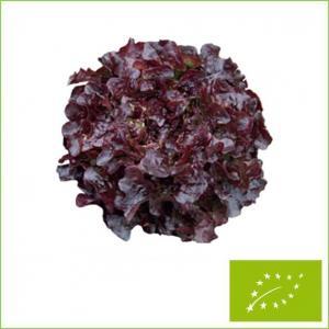 ついに再販開始 有機種子 固定種 特価 グリーンフィールドプロジェクト リーフレタス 20ml オークリーフ 赤