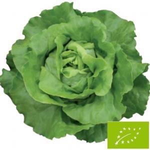 グリーンフィールドプロジェクト サラダ菜/リーフレタス(バターヘッドレタス) 20ml