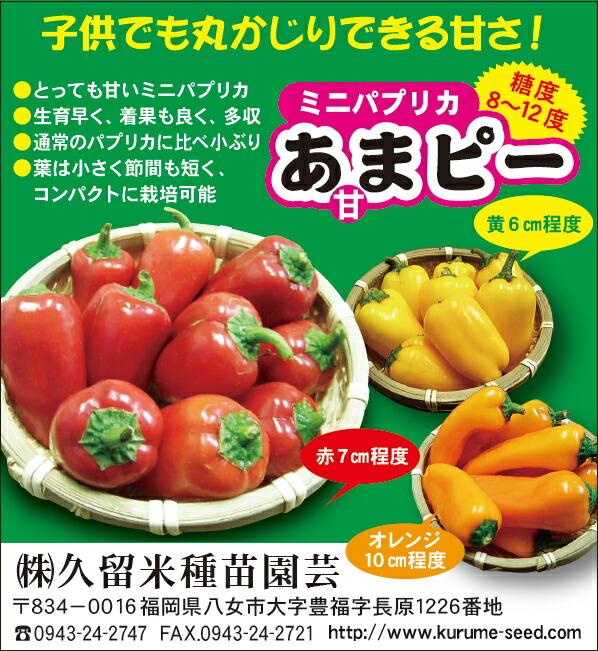 コクがあってとってもおいしい たね 久留米種苗園芸 パプリカ あまピー 甘ピー 記念日 50粒 海外 黄