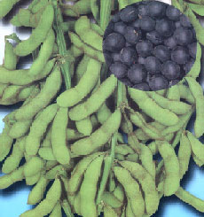 たんくろう?枝豆と連続出荷 丸種 枝豆 中早生たんくろう ●日本正規品● 1L 卸売り