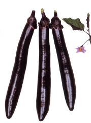 丸種 ナス 長紫 小袋