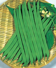 軟莢で揃いと味のよい豊産種 丸種 インゲン 並行輸入品 平莢 キングマーケット つるなし 小袋 すじなし 美品