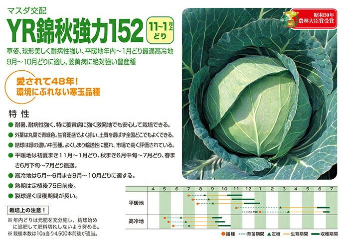 増田採種場 YR錦秋強力152 キャベツ種子 コート 5000粒