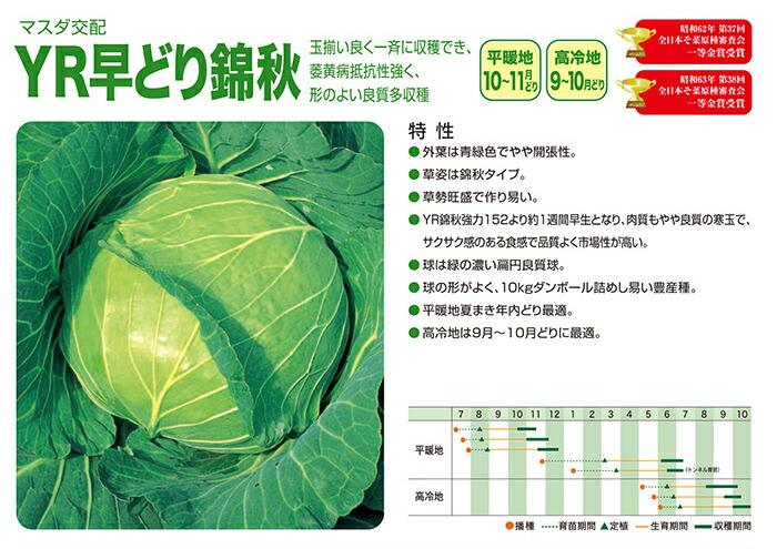 増田採種場 YR早どり錦秋 キャベツ種子 コート 5000粒