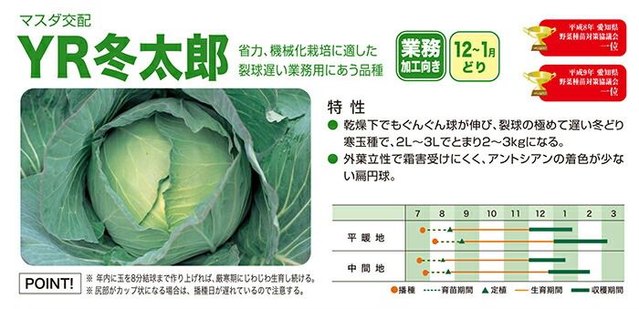 増田採種場 YR冬太郎 キャベツ種子 コート 5000粒
