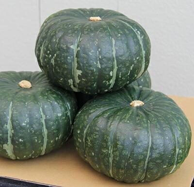 玉がデカイ そして着果量も多い とれすぎ注意 ナント種苗 予約販売品 20ml 一部予約 カボチャ うねび