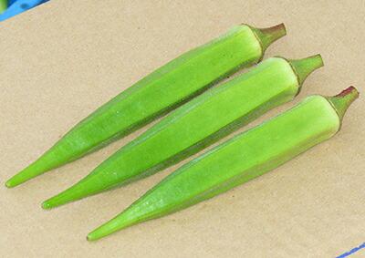 ナント種苗 オクラ アベルグリーン 2dl