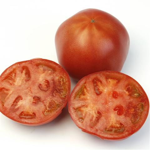 トキタ種苗 トマト 豊作祈願1102 1000粒