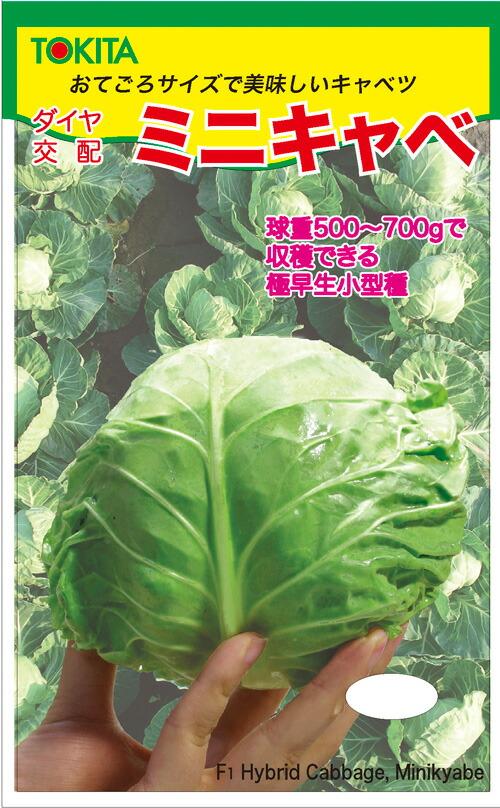 トキタ種苗 きゃべつ ミニキャベ 20ml