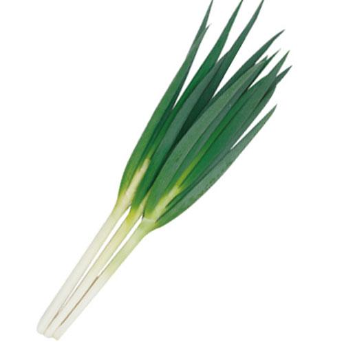 トキタ種苗 葱 葵の剣 2dl