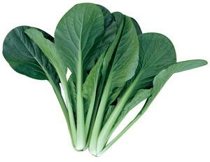 高温期じっくり生育 濃緑 新色追加 多収なコマツナ トキタ種苗 ご予約品 小松菜 夏の甲子園 2dl