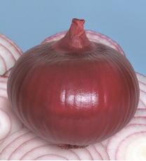 球は甲高形 球外皮は濃い赤紫色 安売り 在庫処分 たね 渡辺採種場 タマネギ 松島レッド 1dl