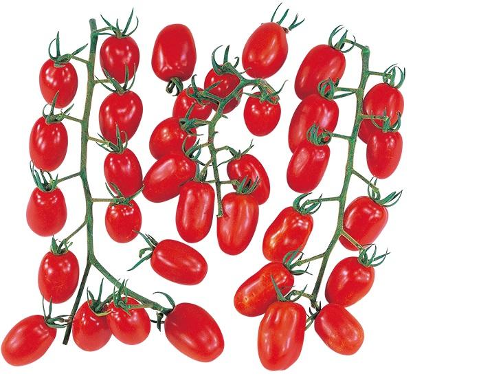 大和農園 トマト ノエル 1000粒