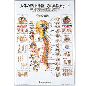 ☆人体の脊髄・神経-その異常チャート(SR-114)【smtb-s】