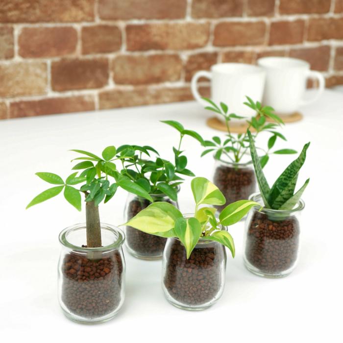 オフィスデスクに!ミニ観葉植物、置いておくだけで癒されるオススメは?
