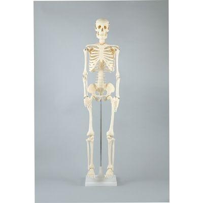 アーテック 人体骨格模型 85cm ATC-8850