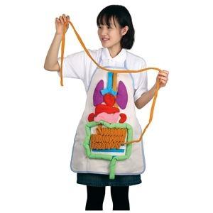 その他 (まとめ)アーテック 内臓の大きさ説明エプロン 【×5セット】 ds-1562871
