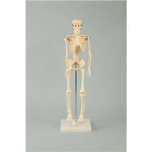 その他 (まとめ)アーテック 人体骨格模型 42cm 【×5セット】 ds-1562926