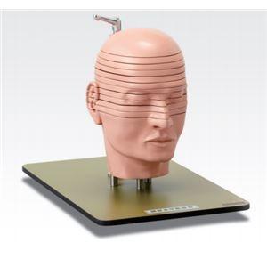 割引購入 その他 その他 頭部水平断模型/人体解剖模型 J-118-0【】【12分解】【12分解】 J-118-0【】 ds-1877934, マツノヤママチ:2af0657c --- borikvino.sk