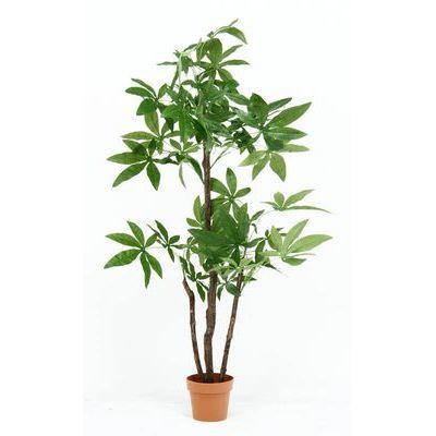 不二貿易 観葉植物 パキラ スタンダード 3967 FJ-52666【納期目安:5/下旬入荷予定】