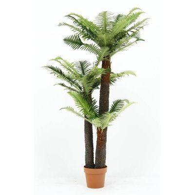 不二貿易 観葉植物 シダ 43 15135 FJ-52678
