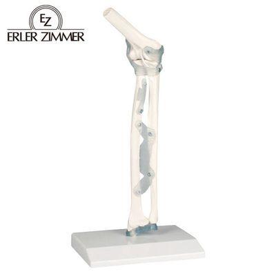 エルラージーマー社 肘関節モデル 4535847005049