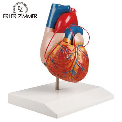 エルラージーマー社 心臓2分解(バイパス付) 4535847005155