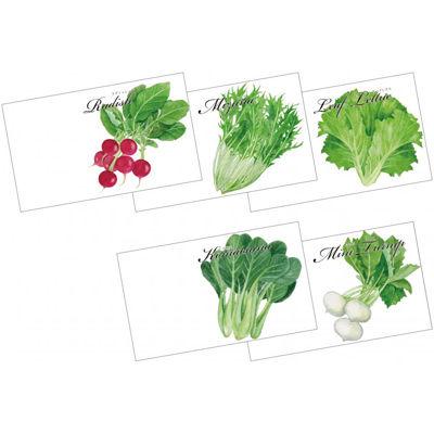 その他 【500個セット】横型イラスト種子1個(野菜) 2214036