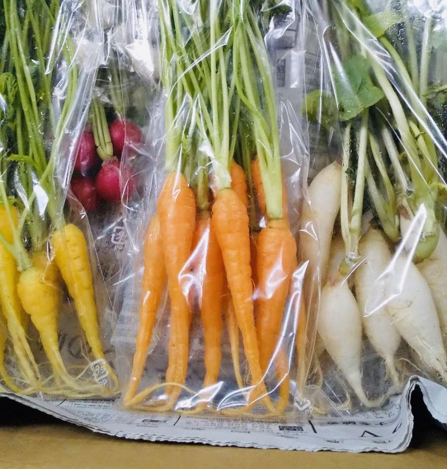 新鮮なミニ野菜は日持ちも良くて 料理が映えます ミニ野菜40本セット 人気急上昇 爆安 ミニキャロット 橙 10本 ラディシュ 代引き不可商品 赤 黄 ミニ大根10本