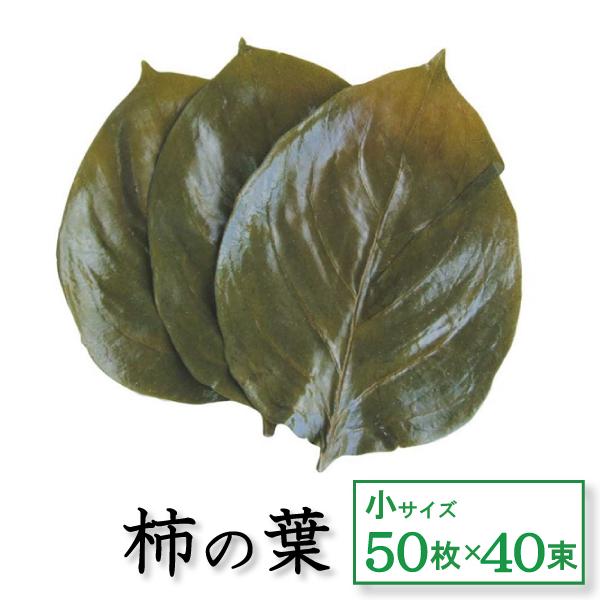 柿の葉塩漬け 小 50枚×40束 天極堂 和食 和菓子 柿の葉寿司 飾り葉 敷き葉 一斗缶入 小サイズ 送料無料