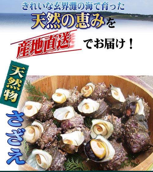 天然物 活き サザエ 8kg 玄界灘 壱岐産  産地直送!