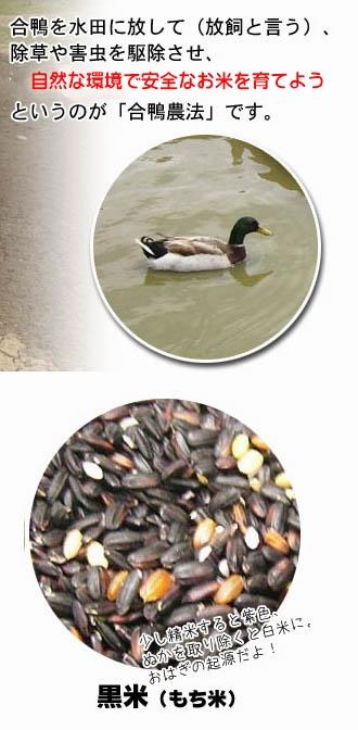 黒米7割、緑米、赤米が3割程度まざつております。一支国 原の辻遺跡 合鴨農法無農薬 古代 黒米 30kg 壱岐 [長崎県]