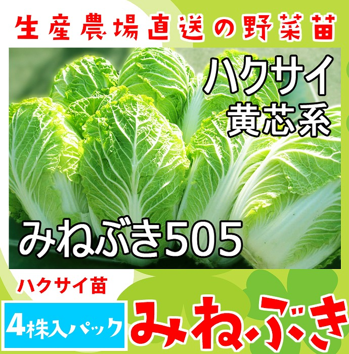 Pack Chinese cabbage leaf greens nursery soil class with four Chinese  cabbage seedling みねぶき 505