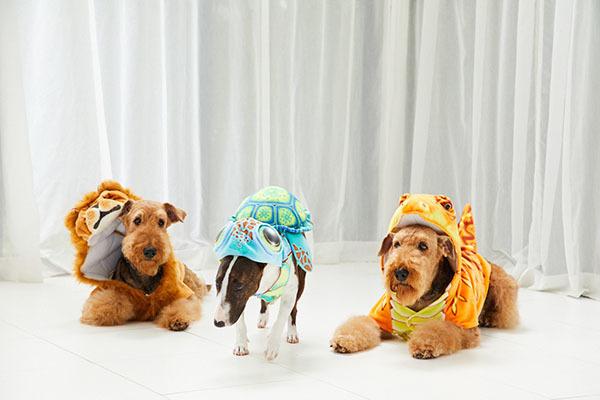 ボクたちだってなりきりたい そんなペットの要望を叶えてくれる人気のアニマルコートが日本に上陸 思わずシェアしたくなる愛くるしさです 海外で人気のペット用アニマルコート DOGGY WANNABE ドギーワナビー Lサイズ ハロウィン 全3種類 ライオン 恐竜 セール 中型犬 クリスマス カメ 価格交渉OK送料無料 大型犬