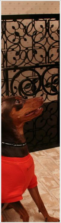 ペットハウス・室内犬小屋Oberon House
